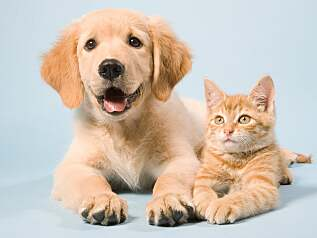 Pet and care products for animals